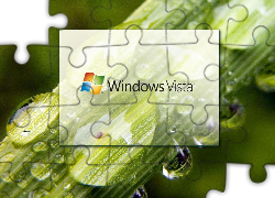 Windows, Vista, Łodyga, Krople, Wody