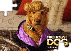 Firehouse Dog, pies, grzywa, kanapa